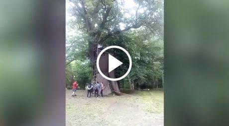 VIDEO ȘOCANT!  Un băiețel de 10 ani se prăbuşeşte de la 8 metri înălţime