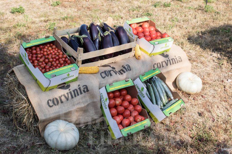 producatori locali traditionali directia agricola (14)