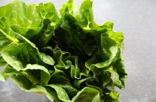 E. coli din salata verde: 90 de persoane internate în spital