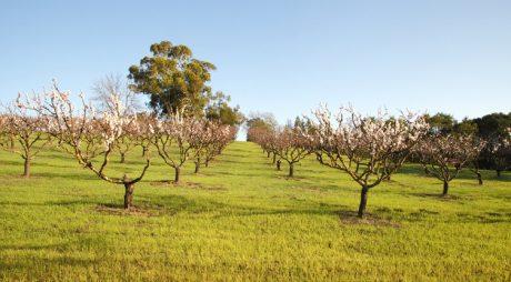 Micii fermieri pot cere 15.000 euro de la stat pentru utilaje, echipamente și modernizări