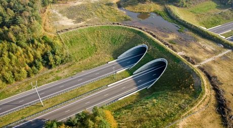 Tuneluri pentru urși, de 180 de milioane de euro, pe autostrada Lugoj-Deva