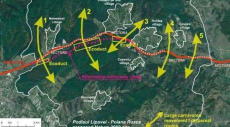 Firmele interesate de construirea Lotului 2 al autostrăzii Lugoj – Deva, cu celebrele tuneluri pentru urși, au solicitat clarificări
