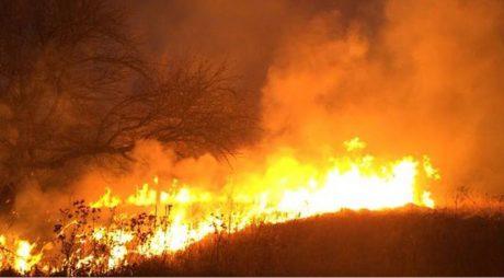 Aproape 50 de incendii de vegetație uscată în județ, în ultimele 2 săptămâni