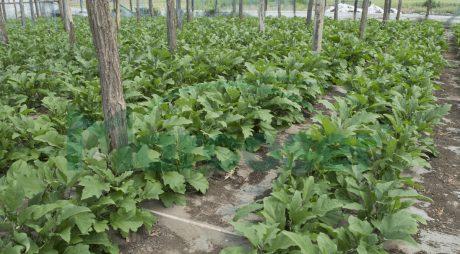Bani pentru fermieri. 1000 euro pentru fiecare 1000 mp cultivați. Condiții