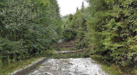 Drumul spre Poiana Pelegii din Retezat, blocat de căderile de arbori