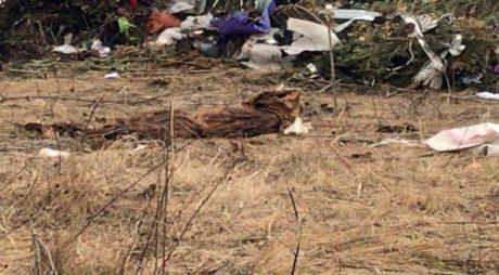 Bucăți de cadavre descoperite între gunoaie, în vestul țării