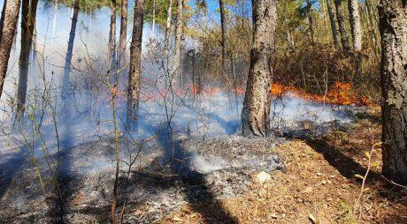 Video: Incendiu în pădurea de la Ciungani